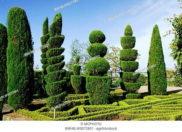 Italian cypress Cupressus sempervirens, topiary, Portugal