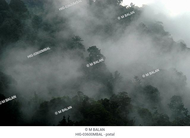 MIST OVER NERIYAMANGALAM HILLS ON MUNNAR ROAD