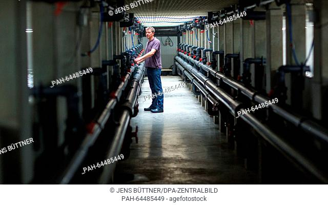 Investor Andreas Kleinselbeck stands next to a breeding tank for Pacific shrimps at the 'Cristalle Garnelen' shrimp farm in Grevesmuehlen, Germany