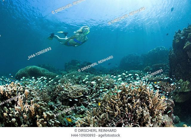 Skin diver, Skin diving, diving, dive, sport, hobby, adventure, swim, swimming, water, sports, watersport, sportdiver, sportdiving, snorkeling, free diver