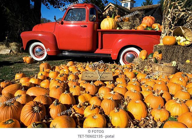 USA, New York, Peconic, pumpkin farm with pickup truck