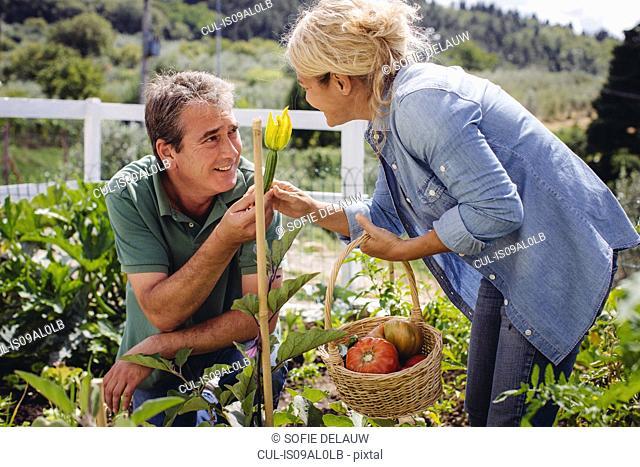 Mature couple picking fresh vegetables