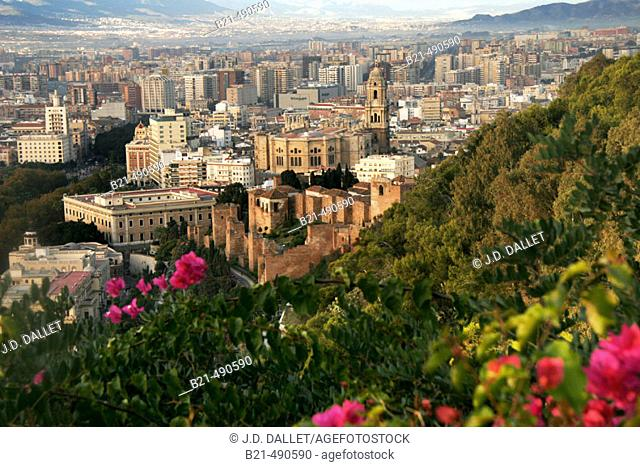 From the Gibralfaro, view over Malaga. In front the moorish Alcazaba, and the cathedral. Málaga province. Spain