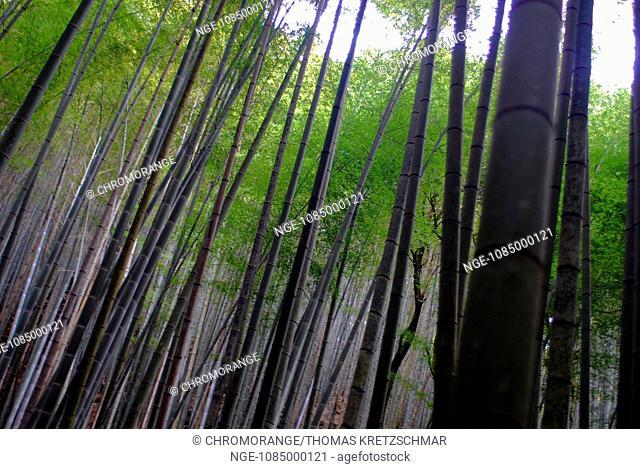 Kyoto/Japan - Bambooforest Kyoto/Japan