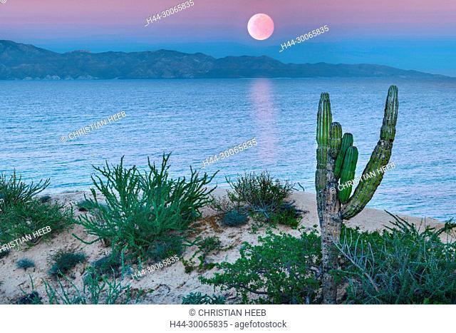 Central America, Mexico, Baja, Moonrise over the Sea of Cortez (m)