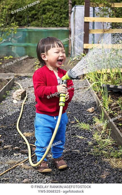 Jiand LIN, aged 2 years, watering his fathers allotment by using a hose, Kilwinning, Ayrshire, Scotland