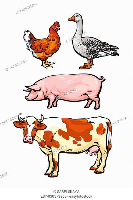 Farm animals, cow, pig, chicken, goose, poultry, livestock, color illustration, sketch style with a set of animals isolated on white background