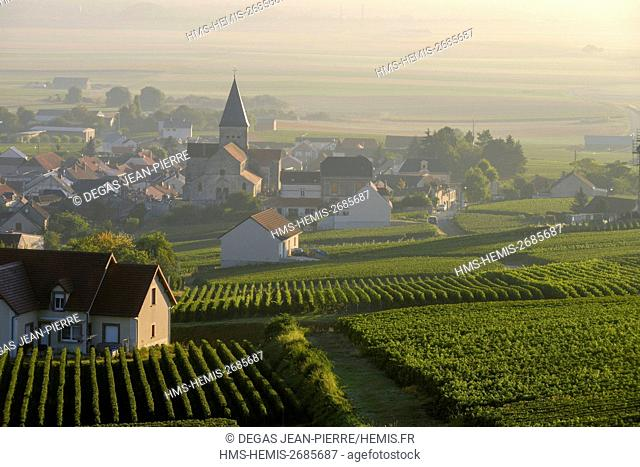 France, Marne, Sacy, mountain of Reims, vineyards of Champagne in the morning mist with a background village