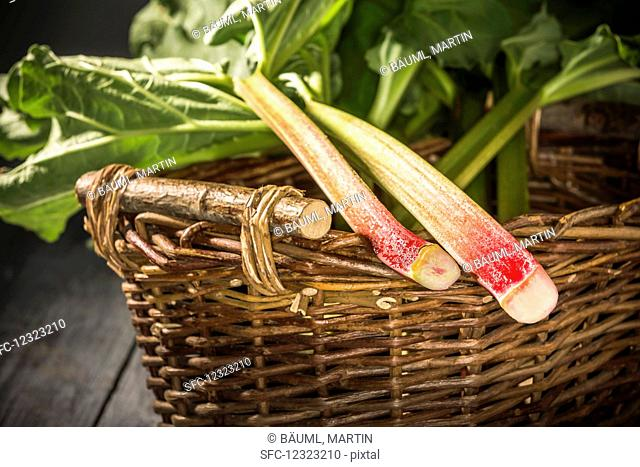 Two freshly harvested rhubarb sticks in a wicker basket