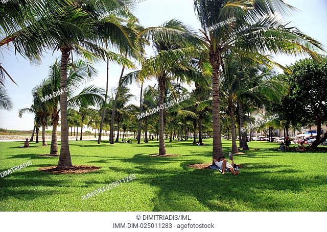 Miami Beach, park, man lying on the grass , Miami, Florida, United States