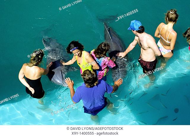 The Bahamas  Tourists get up close with dolphins under supervision at the Dolphin Experience on the island of Grand Bahama