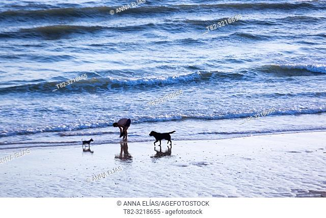 People and dogs in Matalascañas beach, Huelva Province, Andalusia, Spain