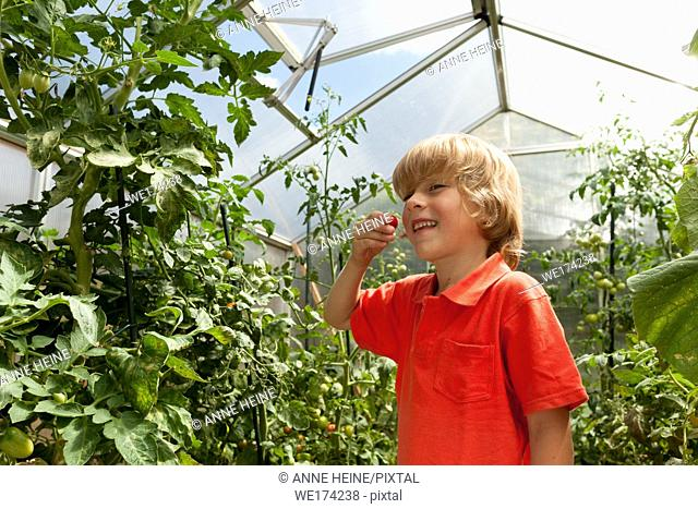 Boy in greenhouse. Sauerland, Germany