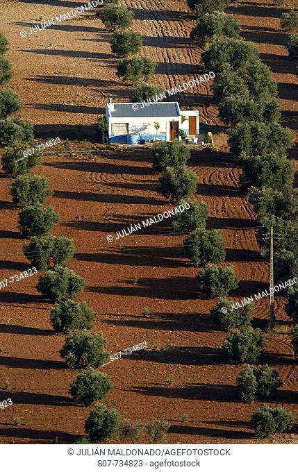 Caseta field