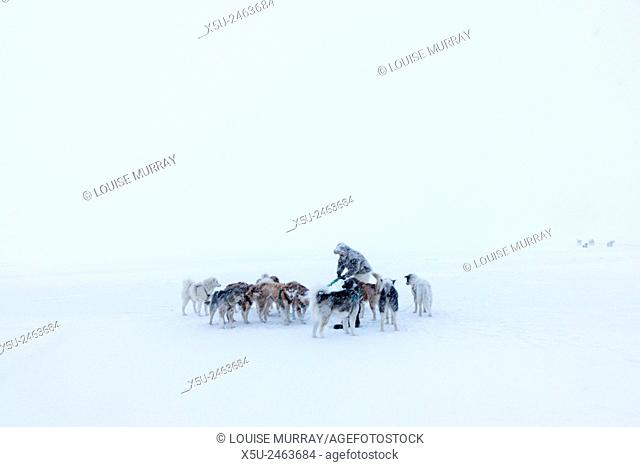Inuit hunter walking his dog team on the sea ice in a snow storm