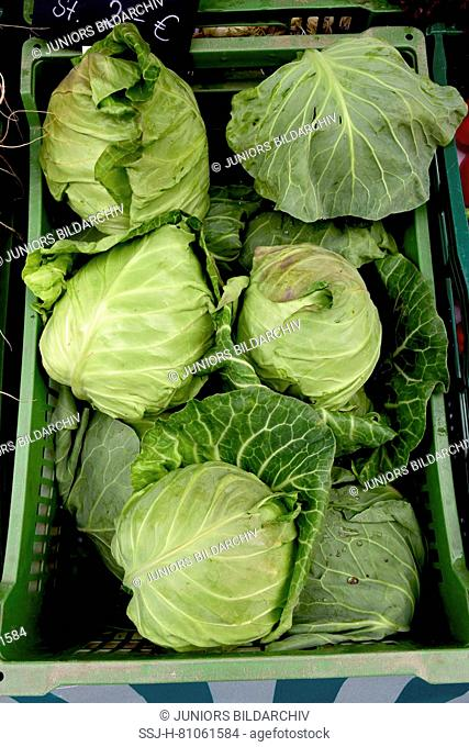 Market Stall offering White cabbage