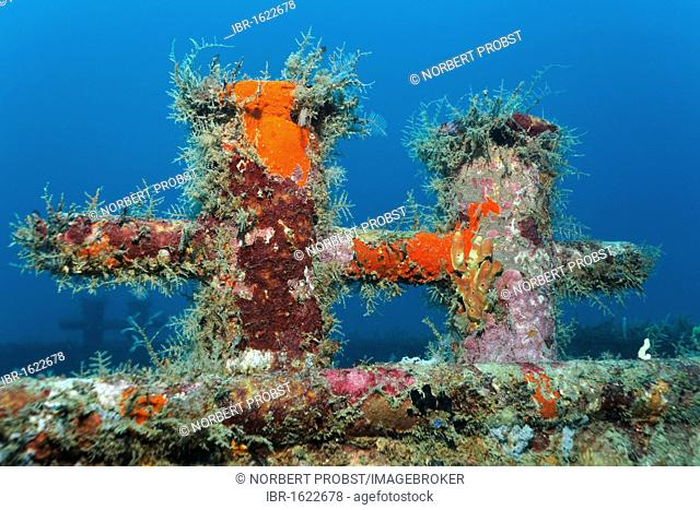 Bitt on deck of a shipwreck, overgrown with sponges, Little Tobago, Speyside, Trinidad and Tobago, Lesser Antilles, Caribbean Sea