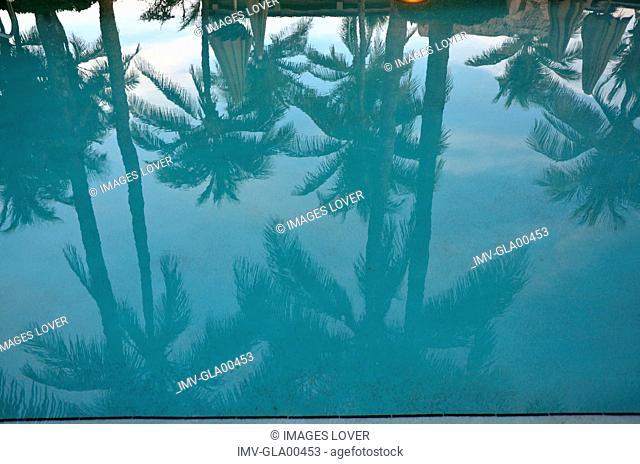 Reflection of Palms, Miami, USA