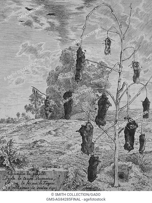 Drawing of dead moles hanging from leafless tree in rural setting, 1867. From the New York Public Library. ()