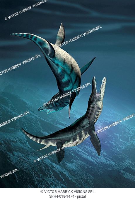 Liopleurodon prehistoric marine reptiles, illustration