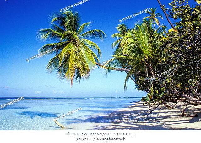sand beach with palms