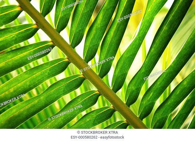 Close up of green leaf of tropical plant