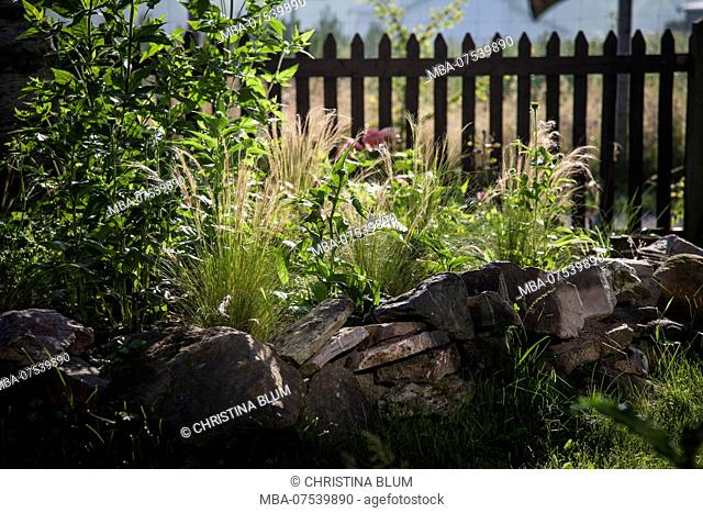 Plant bed with feather grass and coneflower