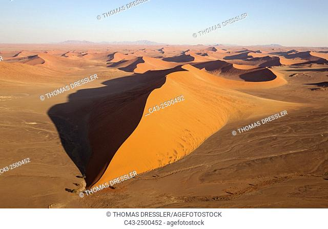 Sand dunes in the Namib Desert. The trees at the bottom of the dune are Camelthorn trees (Acacia erioloba). In the evening. Aerial view