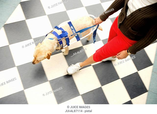 High angle view of blind woman and seeing eye dog
