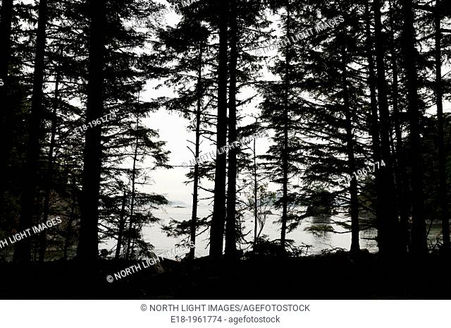 Canada, BC, Vancouver Island. Broken Island Group, part of the Pacific Rim National Park on the Pacific coast. View of the Pacific Ocean through the trees of...