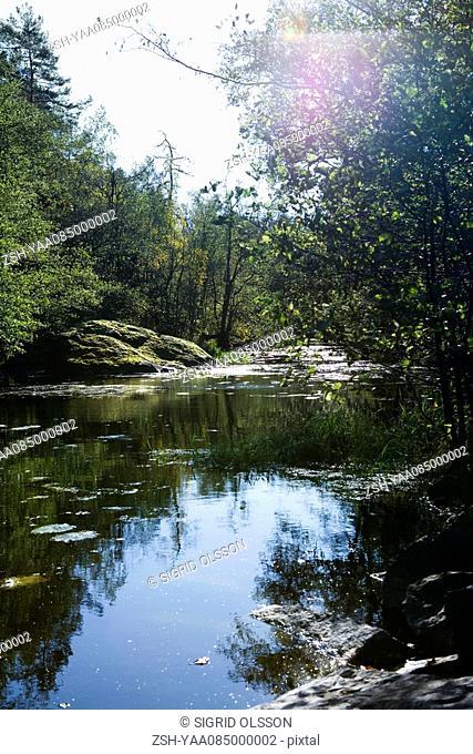 Tranquil river scene