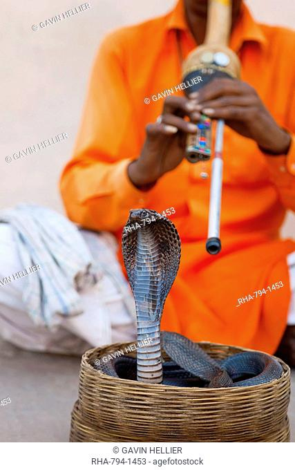 Snake charmer basket Stock Photos and Images | age fotostock