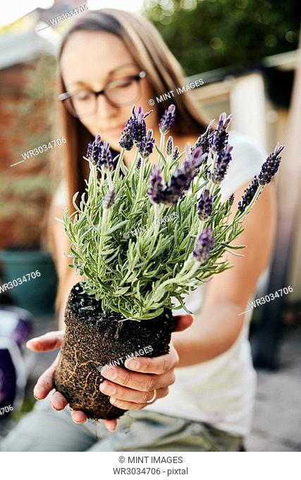 A young woman holding a rooted lavendar plant with purple flowers