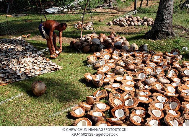 men processing coconut, Teluk Melano, Sarawak, Borneo