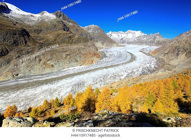Aletsch, Aletsch glacier, Aletsch area, Aletsch glacier, mountains, Alps, view, Aletsch wood, forest, big, great, mountains, Alps, autumn, colors, larch