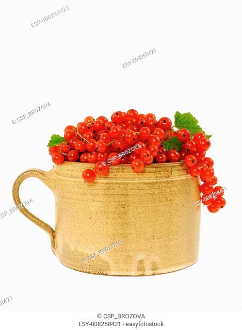 Ceramic cup full of fresh red curra