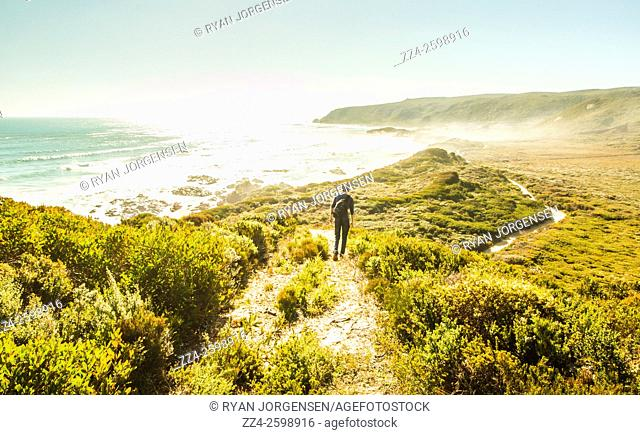 Colorful landscape photo of a male hiker walking a pristine bush meets ocean trail on the stunning West Coast of Tasmania, Australia