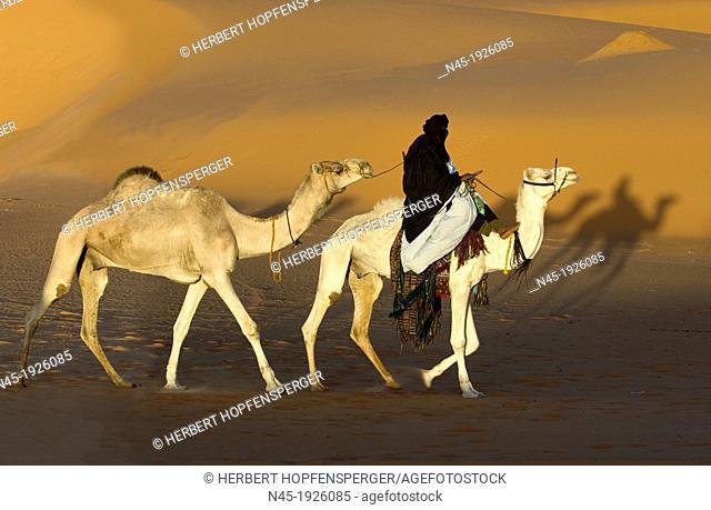 Tuareg; Tuareg is riding a Camel; Tuareg Caravan; Libyan Desert; Libyan Arab Jamahiriya