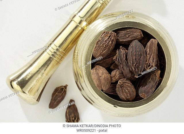 Spices , brown cardamom pods elaichi elettaria cardamom in metallic mortar and pestle on white background