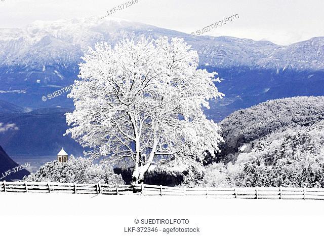 Snowcapped landscape, Oberbozen, Ritten, Alto Adige, South Tyrol, Italy