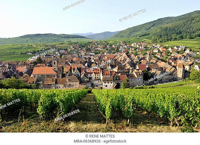 France, Haut Rhin, Alsace Wine Road, Riquewihr village, labelled Les Plus Beaux Villages de France (The Most Beautiful Villages of France) and the vineyard