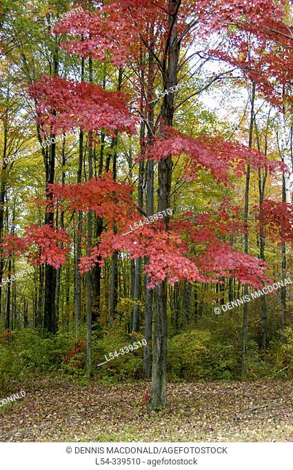 Autumn colours. Michigan, USA