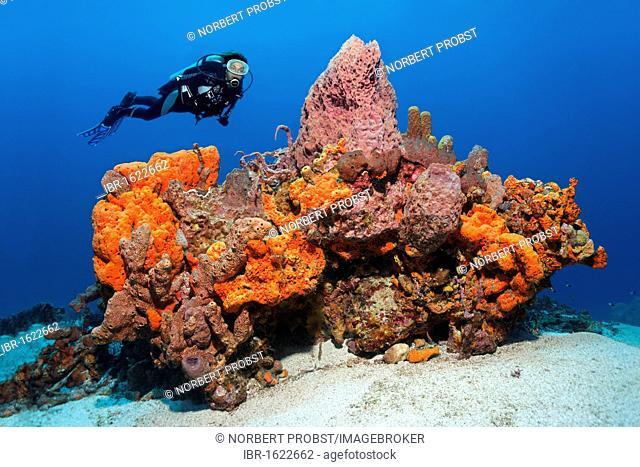 Scuba diver observing a large reef formation, various colourful sponges, coral, sandy bottom, Little Tobago, Speyside, Trinidad and Tobago, Lesser Antilles