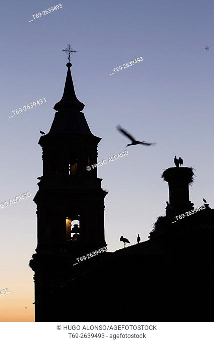 higher concentration of white stork nests in Europe: Collegiate Church of St. Michael the Archangel, Alfaro, La Rioja, Spain