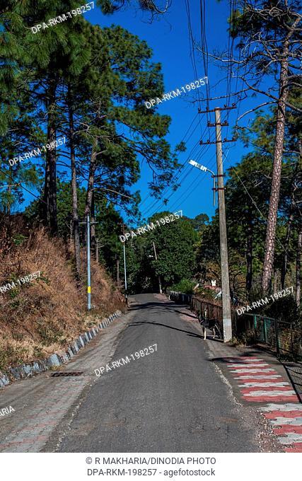 Road, kasauli, himachal pradesh, india, asia