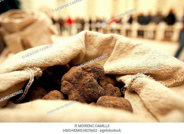France, Vaucluse, Carpentras, the Hotel Dieu, the truffle market, Melano black truffle (Tuber melanosporum)