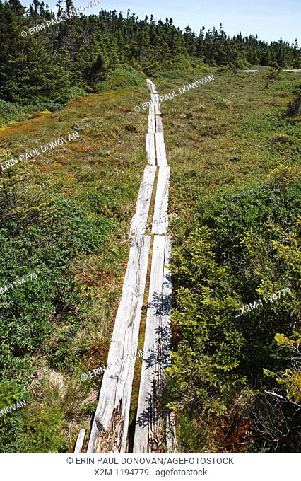 Appalachian Trail - Alpine/subalpine bog on the summit of Mount Success in Success, New Hampshire