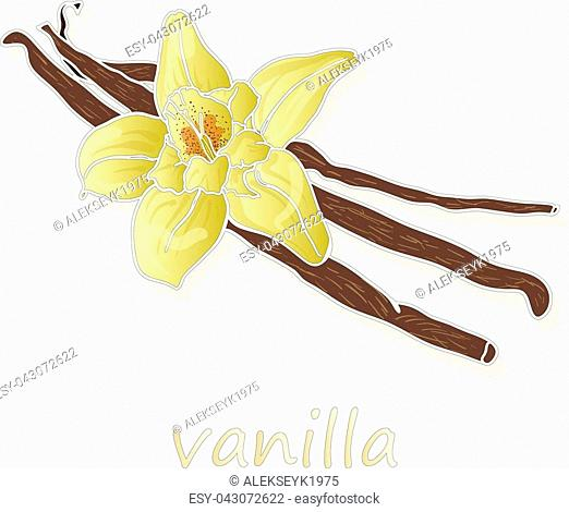 Vanilla sticks with flowers on white backgrounds