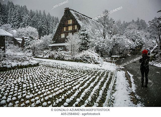 Traditional gassho zukiri farmhouses. Shirakawago. Chubu region. UNESCO World Heritage. Japan