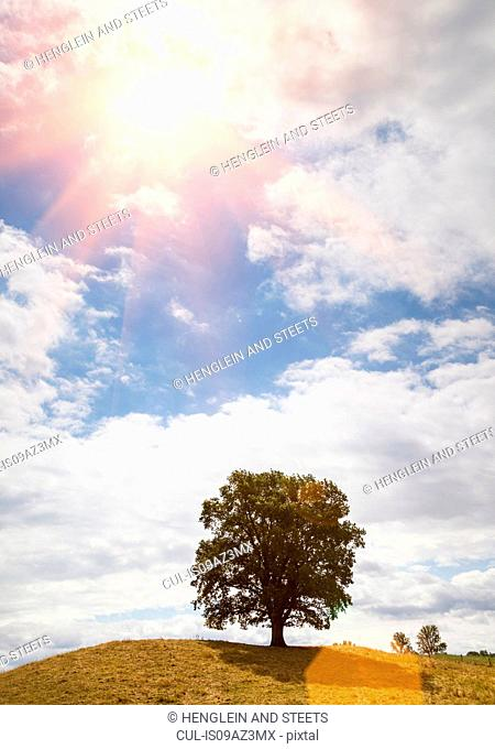 Tree on hill and sunlit blue sky